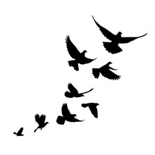 A Flock Of Birds (pigeons) Go Up. Black Silhouette On A White Ba
