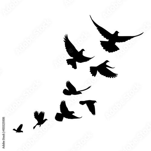 Fotografía A flock of birds (pigeons) go up. Black silhouette on a white ba