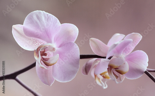 Foto op Canvas Orchidee Storczyki - Orchidea