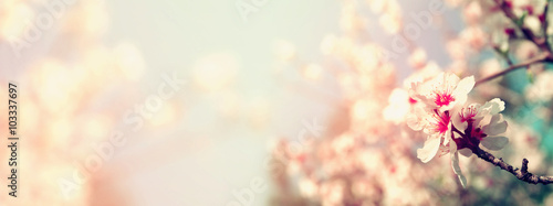 Abstract blurred website banner background of of spring white cherry blossoms tree. selective focus. vintage filtered with glitter overlay