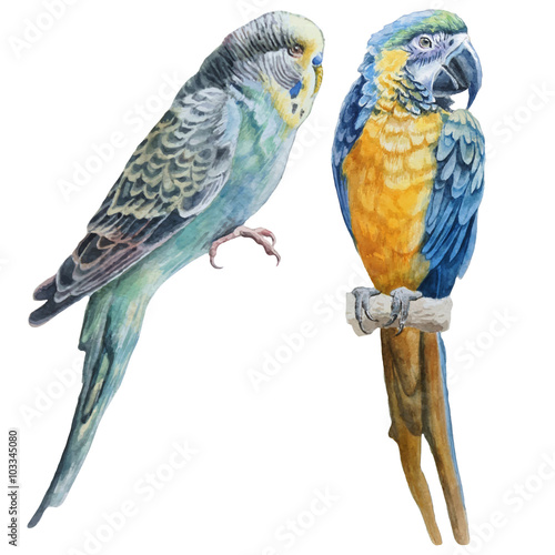 Watercolor birds. Blue budgerigar and blue parrot macaw. Fotomurales