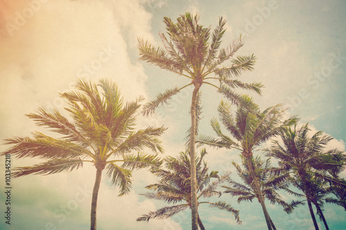 Garden Poster Retro Coconut palm tree with vintage effect.