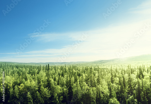 Fototapeten Wald forest in sunset time