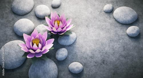 dwa-lotosowego-kwiatu-na-kamieniach