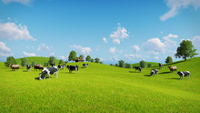 Herd Of Cows Graze On The Open Green Meadows At Spring Day. Realistic 3D Illustration.