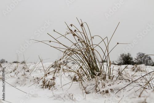 Fototapeten Natur Betesmark på vintern
