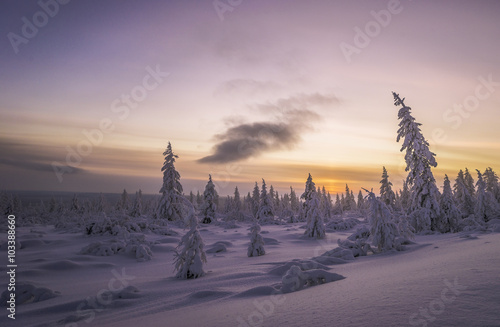 Printed kitchen splashbacks Eggplant Winter landscape with forest, cloudy sky and sun