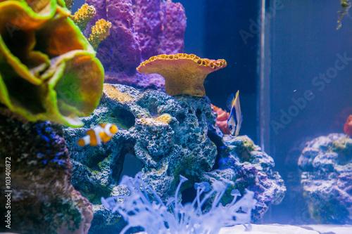 Fotografie, Obraz  Mořské ryby