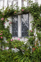 Leaded Window With Roses On Timber Framed Building Circa 1500c
