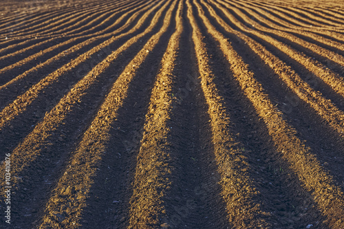 Photo  Furrows row pattern in a plowed field prepared for planting potatoes crops in spring