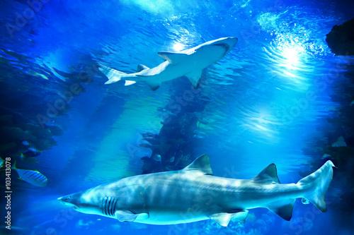 rekiny-i-male-ryby-w-akwarium