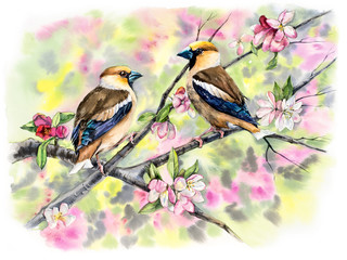 FototapetaGrosbeaks on a branch with flowers. Decoration with wildlife scene. Pattern with two birds. Watercolor hand drawn illustration