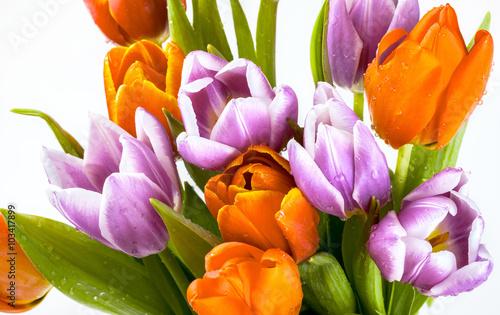piekny-bukiet-purpurowi-i-czerwoni-tulipany-odizolowywajacy-na-bialym-tle