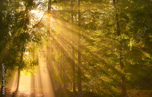 Sunbeams in spring forest Canvas Print