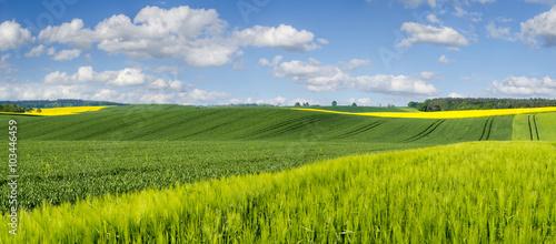 obraz dibond Zielone łany młodego zboża na polu w Niemczech