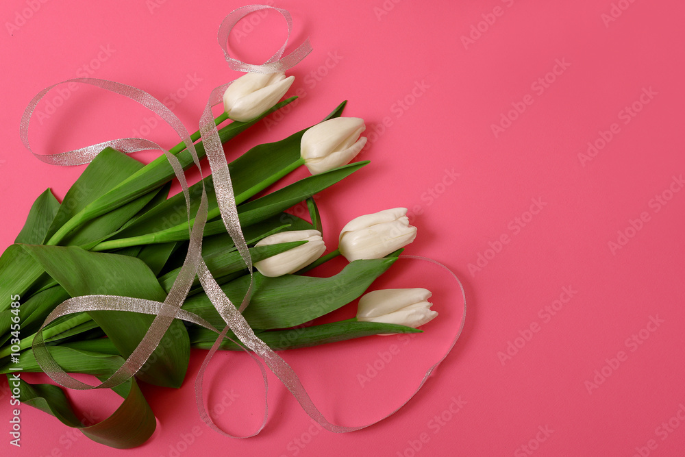 Fotografía White Tulip On Pink Background Hd Wallpaper Or