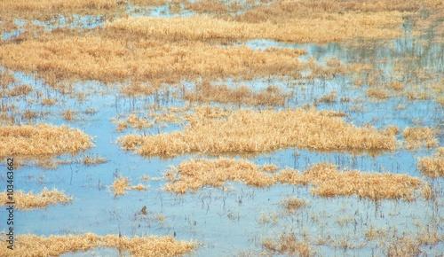 Hochwasser im Frühling Canvas Print