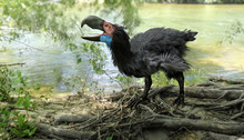 Gastornis By River (Terror Bir...