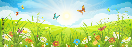 Floral summer or spring landscape, meadow with flowers, blue sky and butterflies - 103492061