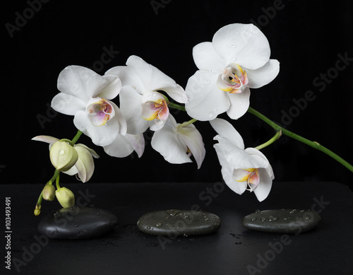 White Orchid on a black background - 103493491