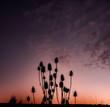 Silluette Sky