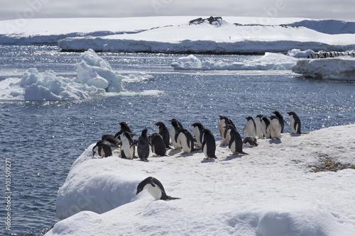 Foto auf Gartenposter Antarktika Adélie Penguins, Antarctica.