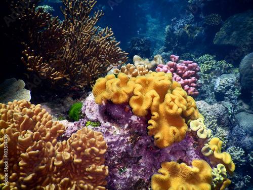 Spoed Foto op Canvas Onder water Coral landscape