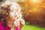 Fototapeta Puff-ball - Little curly girl blowing dandelion.