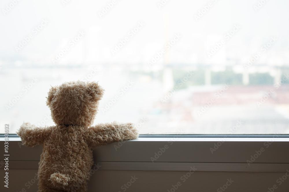 Fototapeta Bear Looking Out Window