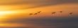 Leinwandbild Motiv Vogel Vögel Singschwäne - Flug zum Sonnenuntergang