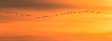 Vogel Vögel Singschwäne - Flug Zum Sonnenuntergang - Hintergrund