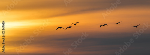 Fotobehang Vogel Vogel Vögel Singschwäne - Flug zum Sonnenuntergang
