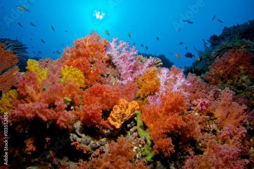 Foto op Aluminium Onder water CORAL GARDEN / Soft corals are tone of the most colorful colonies on the sea, you can spot many varieties on Maldives