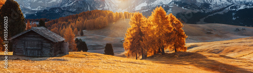 Poster Deep brown Italy. Dolomites. Autumn landscape with bright colors, house and larch trees in the soft sunlight.