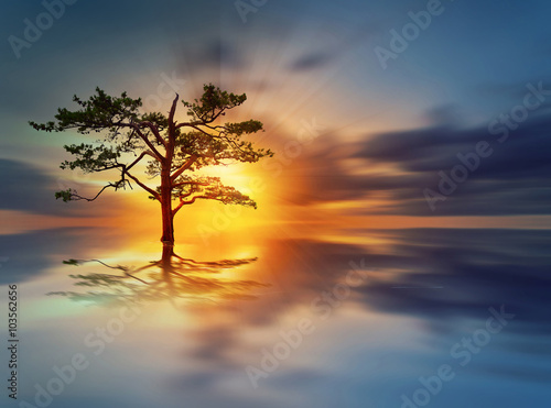 Foto  Sunrise tree