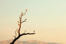 Two Storks Perched On A Tree