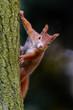 Squirrel fashion model posing on the tree