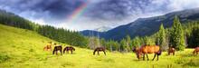 Carpathian Mustangs In Gorgany