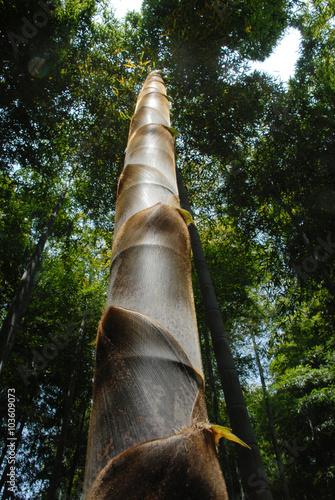 竹の子 плакат