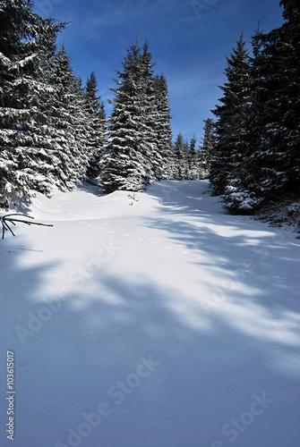 Obraz na plátně  winter Jeseniky mountains near Medvedi vrch hill above Vrbno pod Pradedem with t