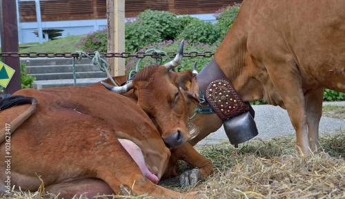 Photo salon de l'agriculture, crise agricole