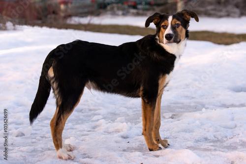Foto  Mischlingshund auf einem Spaziergang an einem Winternachmittag