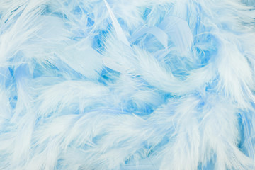 Beautiful blue feathers background