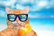 Cat Wearing Sunglasses Relaxin...