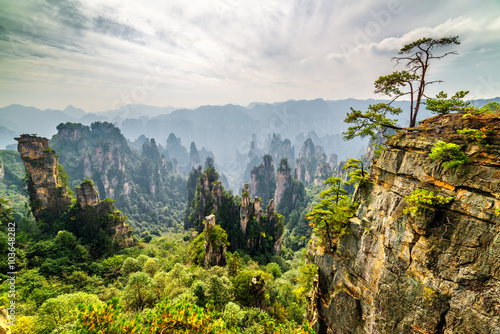 Photo  Tree growing on top of rock and natural quartz sandstone pillars