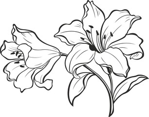 Fototapeta Lily flowers. Blooming lily. Card or floral background with blooming lilies flowers. Silhouette of lily flowers isolated on white background. Vector illustration.