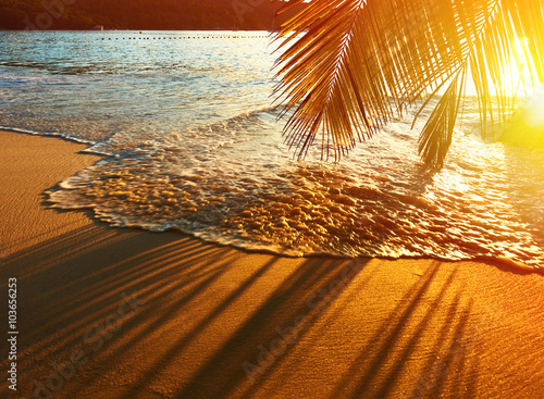 Fotografering  Beautiful sunset at Seychelles beach with palm tree shadow