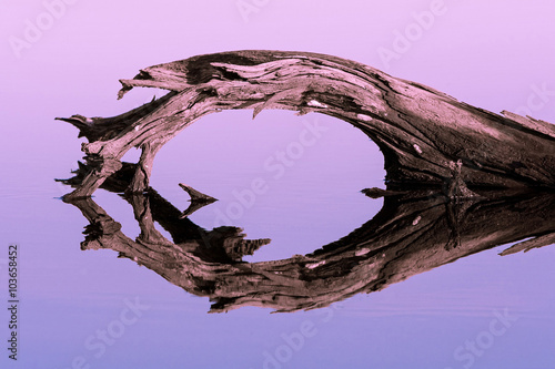 Fotografie, Obraz  Withered old crooked log with reflection