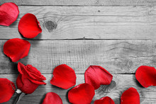 Red Rose And Petals On Black And White Wooden Background