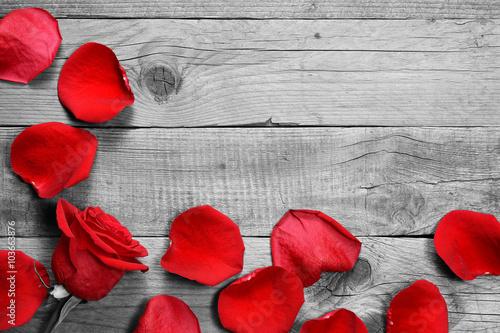 Plakaty czerwone płatki róży